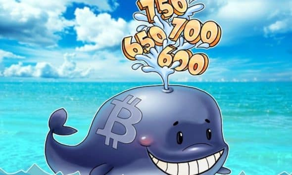 A Bitcoin Whale is one among such crypto lingos used in the Crypto space.